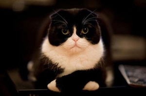 Disapproving cat disapproves.