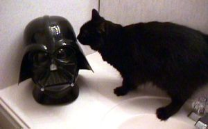 A cat sniffs a Darth Vader mask.