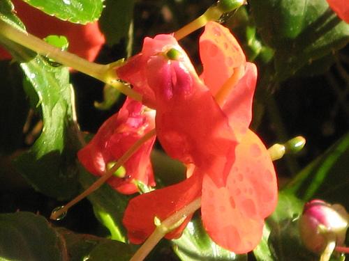 late bloomer movie botanist
