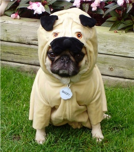 A pug dressed in a pug costume.