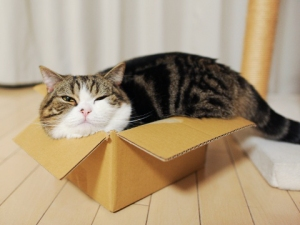 Maru defies your societal expectations of box-fitting