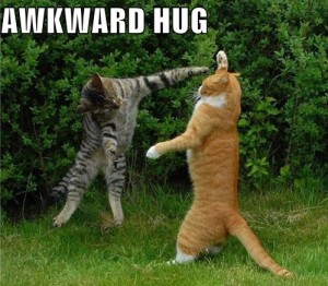 "Two cats in a fighting position with the word ""awkward hug"" above it."