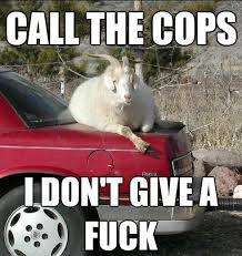 A white goat lounges insolently on the trunk of a red sedan. The caption reads CALL THE COPS I DON'T GIVE A FUCK.