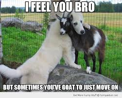 A big white fluffy Great Pyrnees dog gently hugs his buddy, a small black and white goat. The caption reads I FEEL YOU BRO BUT SOMETIMES YOU'VE GOAT TO JUST MOVE ON.