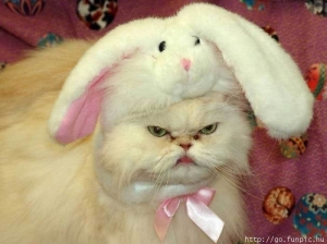 An angry cat with a bunny costume