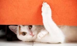 A cat hiding under an orange sofa
