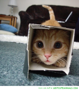 A cat hiding in a tiny box.