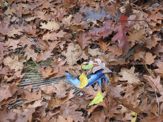 A rake buried in leaves