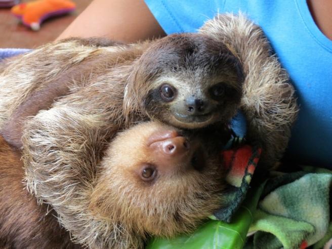 slothhug