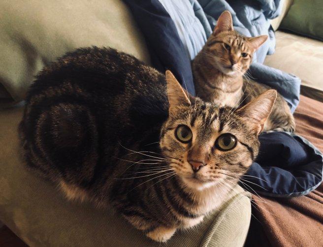 troublemint twins